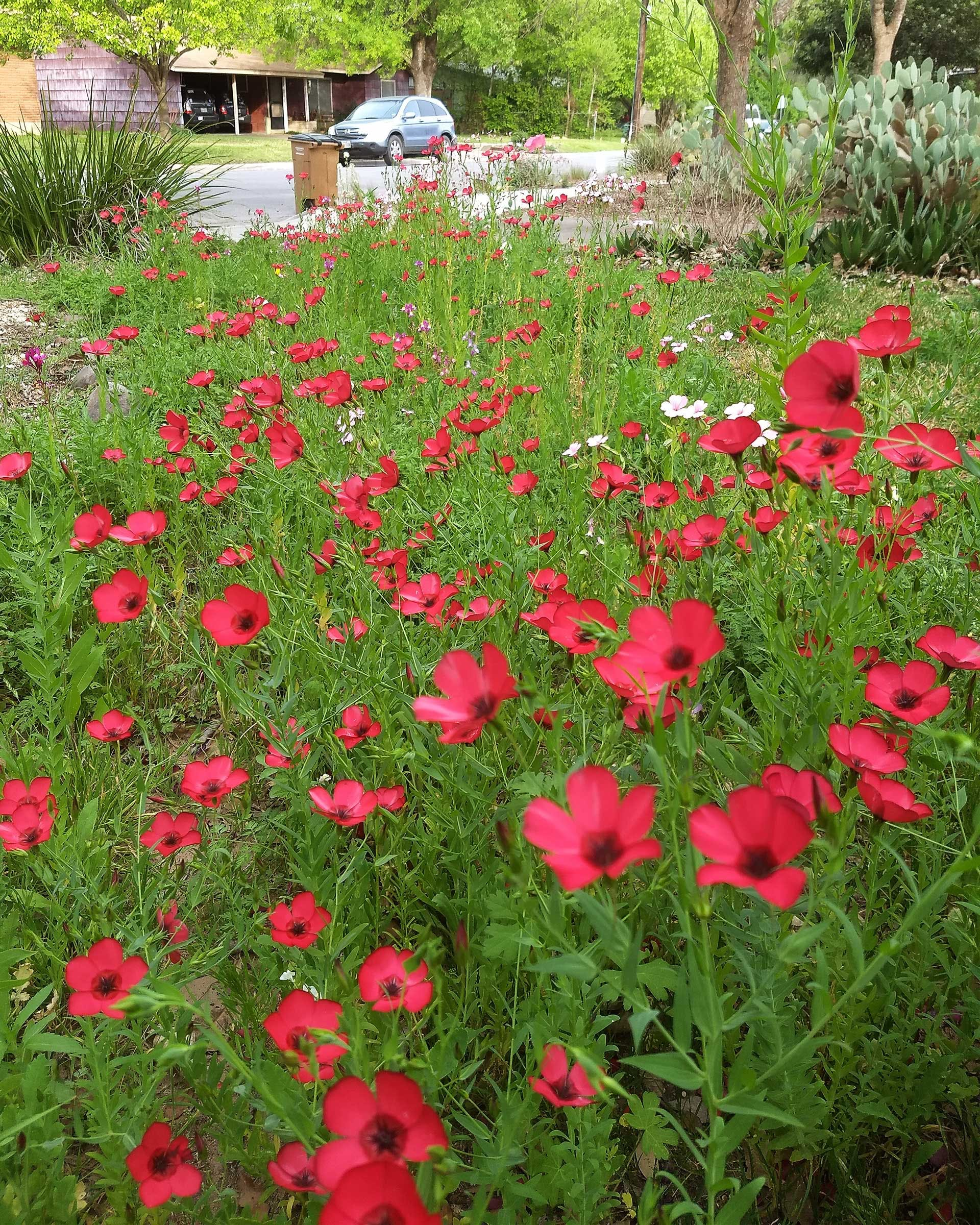 gardening-tips-wildflowers