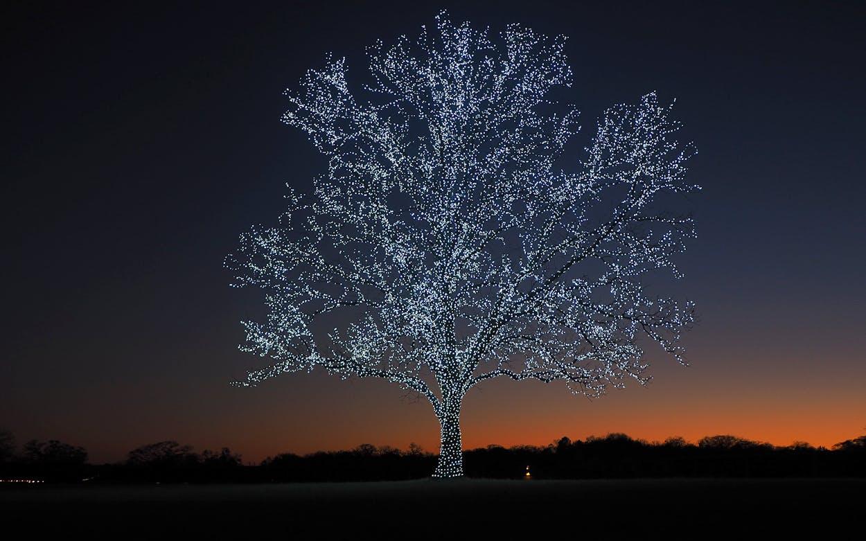 bartonville tree