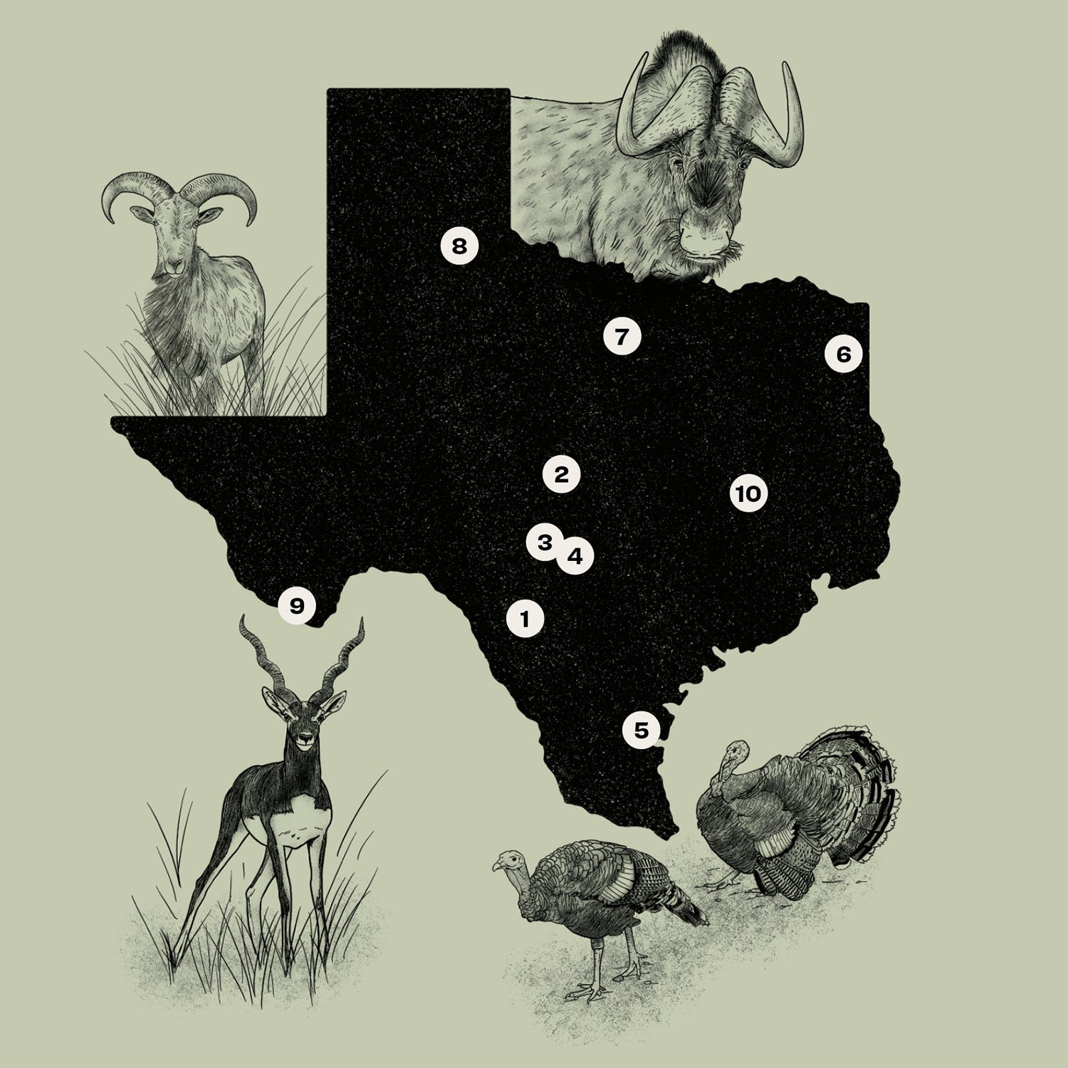 texas exotic hunting map