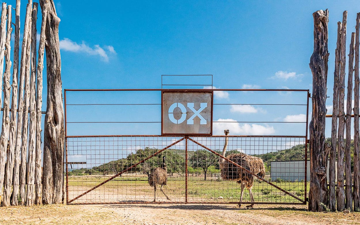 exotic texas hunting locations