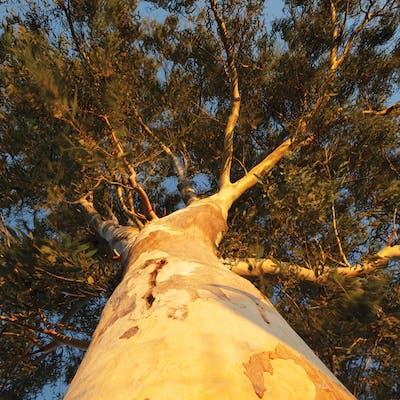 Stella P. Garcia's miracle tree.