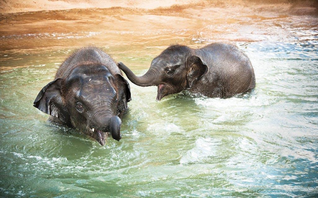 Houston_Zoo-feature-elephants