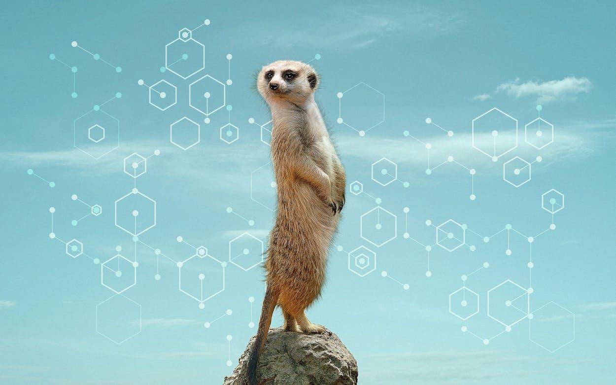 DNA zoo photo illustration