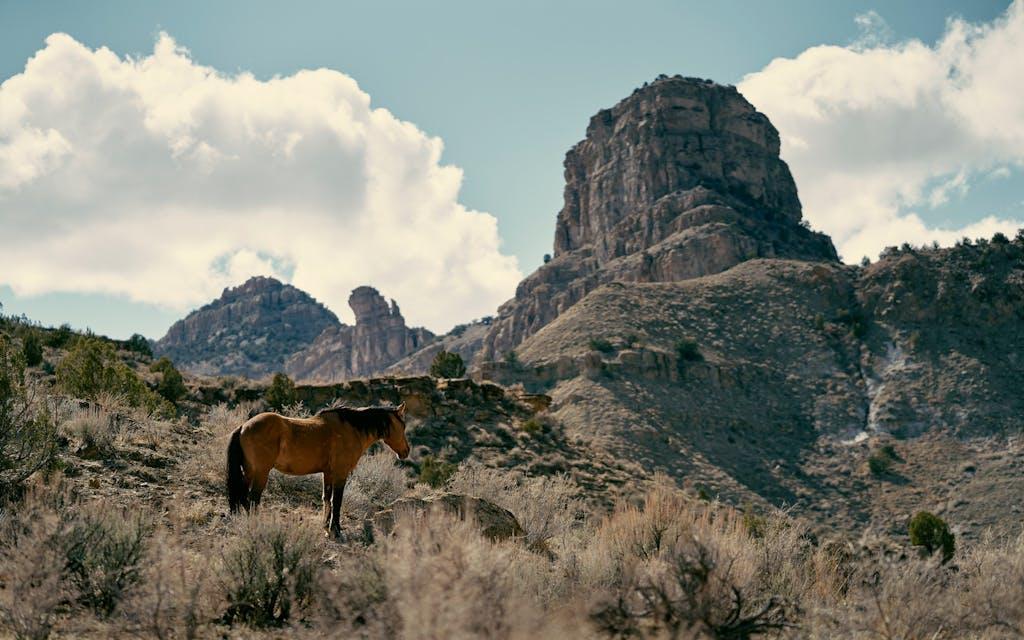 The Little Book Cliffs Wild Horse Range, near Grand Junction.