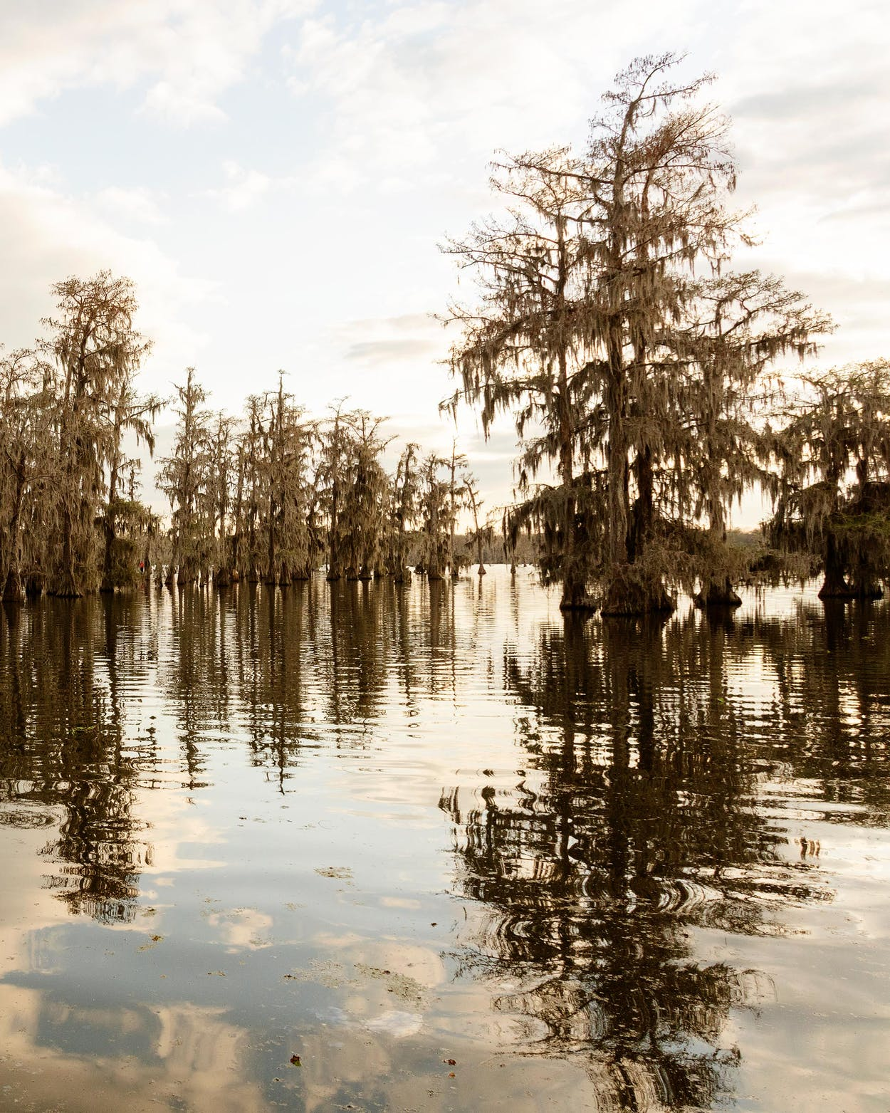 Lake Martin, just south of Breaux Bridge and east of Lafayette.