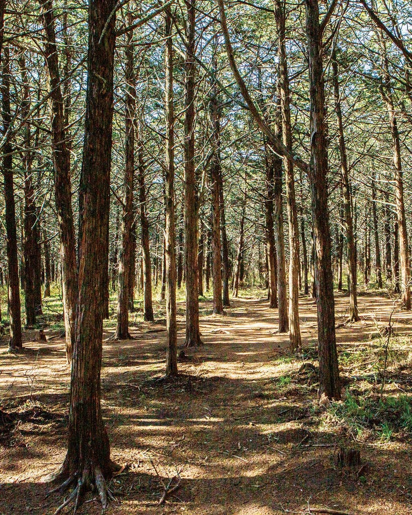 The Parallel Forest, in Oklahoma.