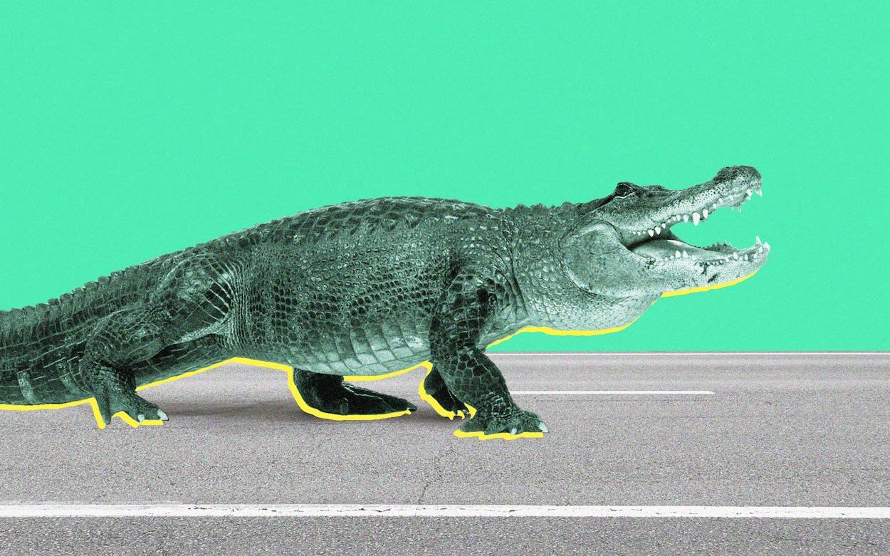 Photo illustration of alligator crossing road