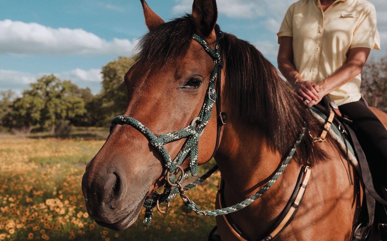 horseback riding backcountry