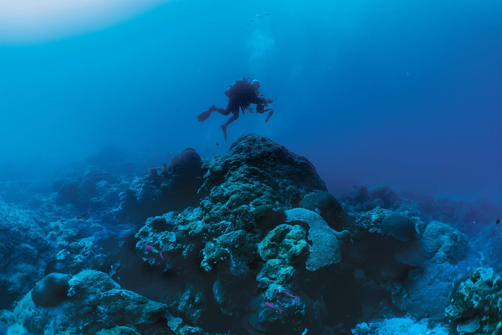 A diver swimming over an ancient coral colony.