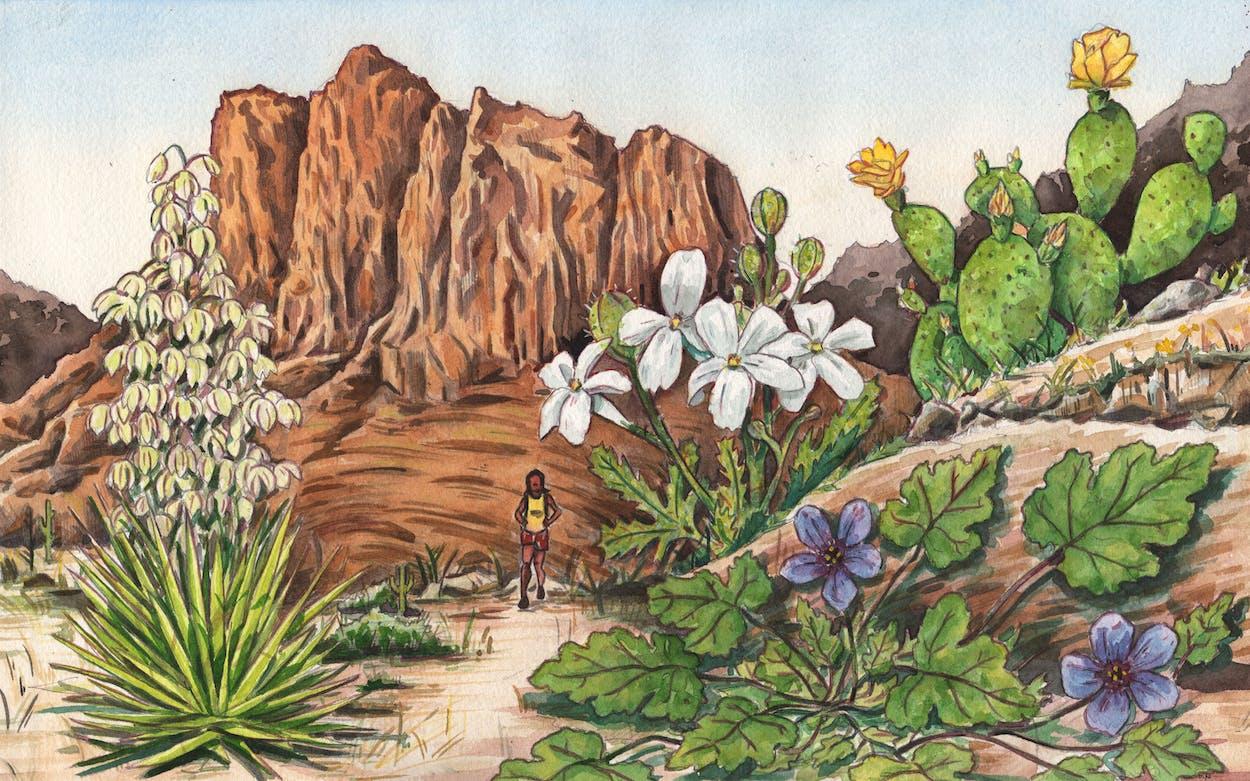 Foraging-Essay-Texas-Dripping-Springs-Plants