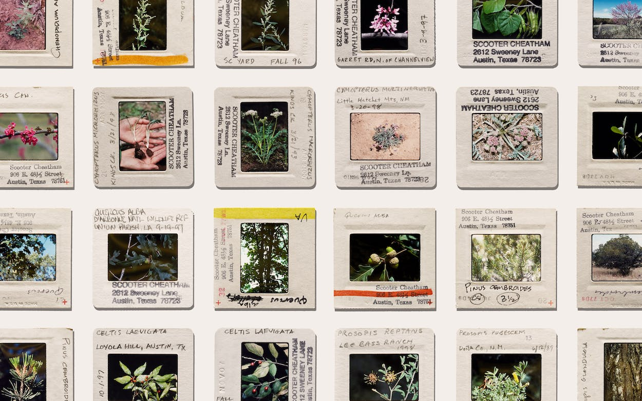 state of mind podcast wild plants
