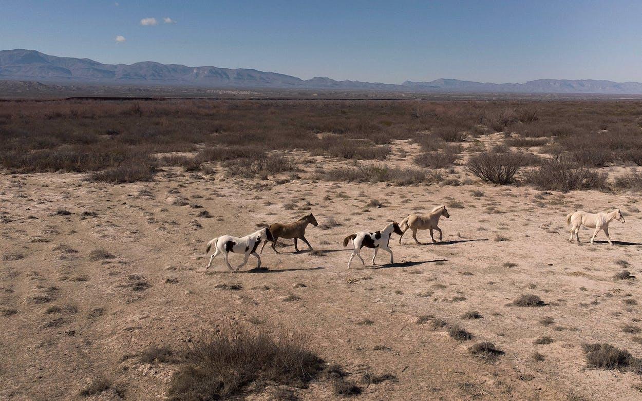 esperanza texas ranch horses