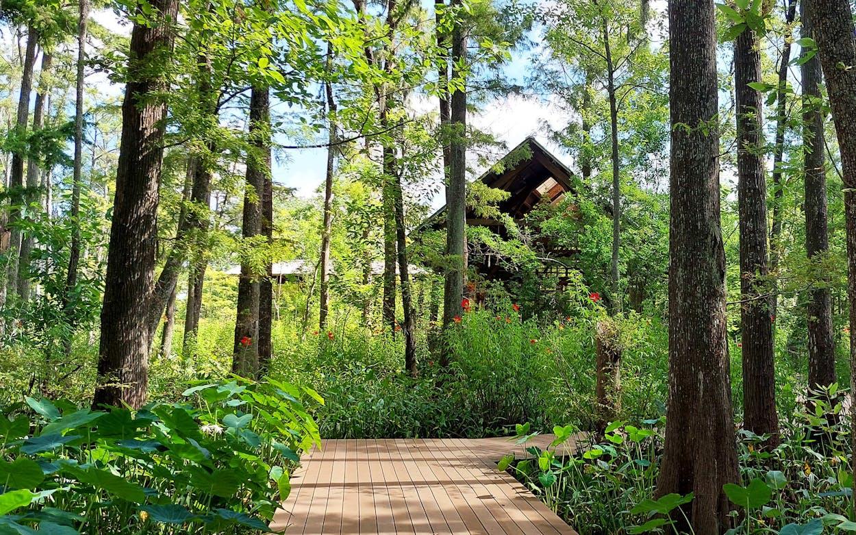 Cypress Tupelo Swamp at Shangri La Botanical Gardens and Nature Center