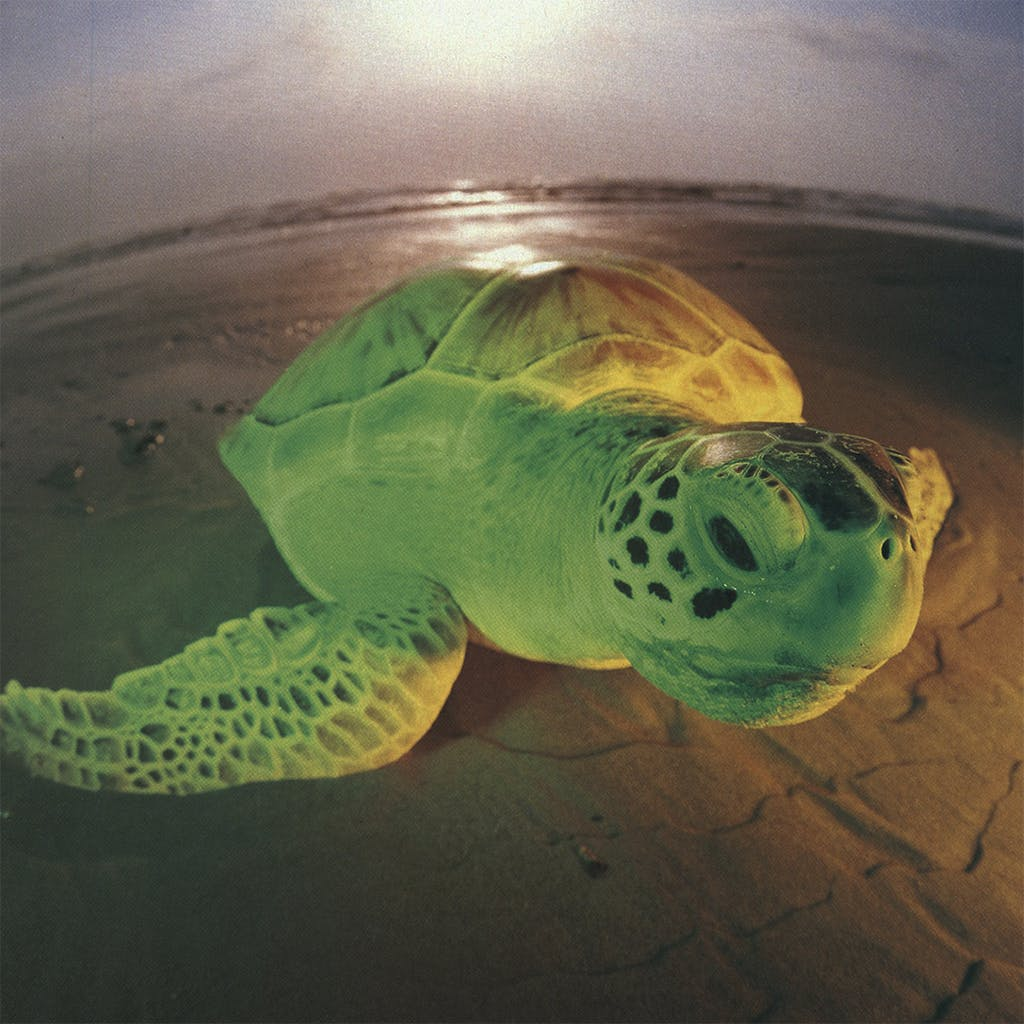 Animal Attractions Jerry the Sea Turtle