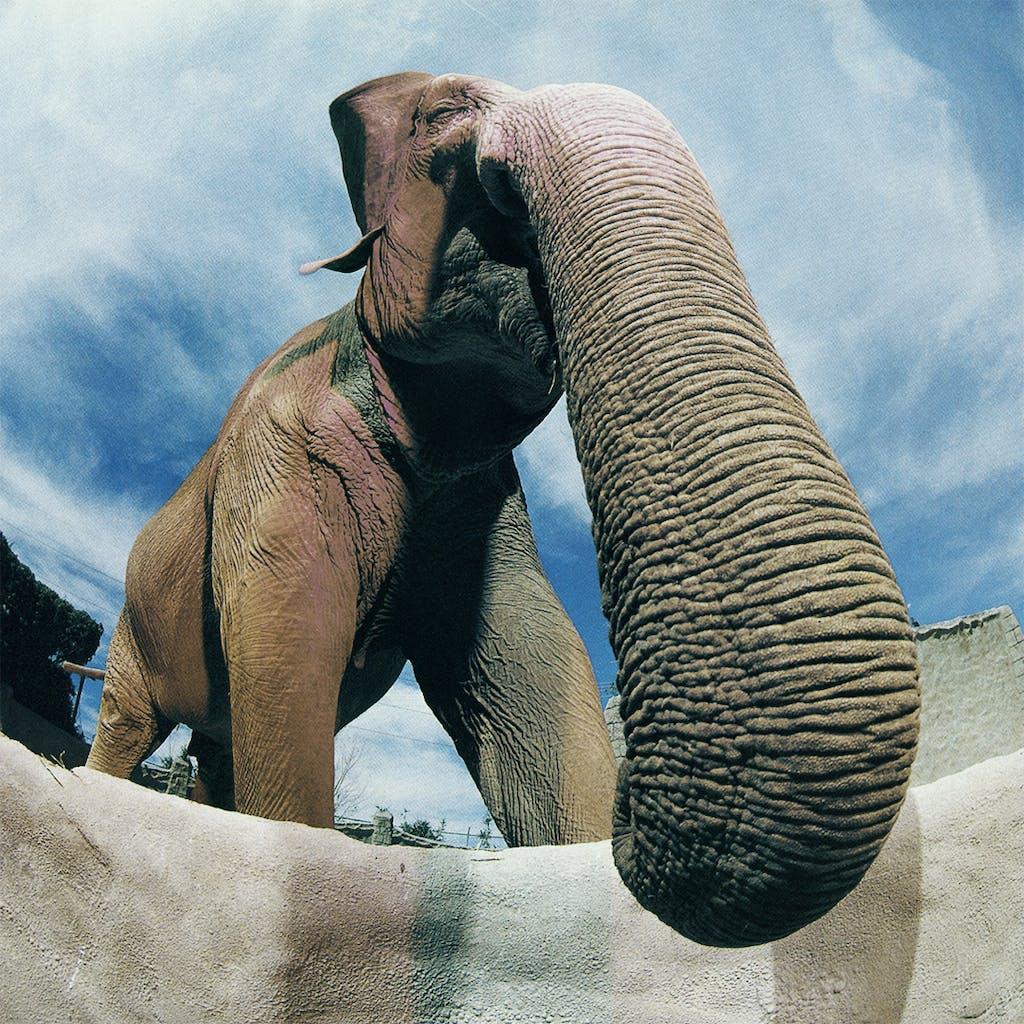Animal Attractions Mona the Elephant